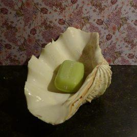 Prachtige schelp