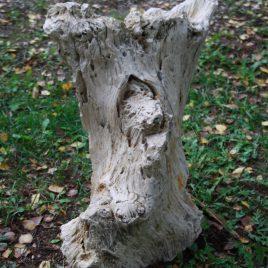 Fossiel hout 2